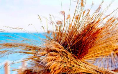 Σωτήριες οι φυτικές ίνες